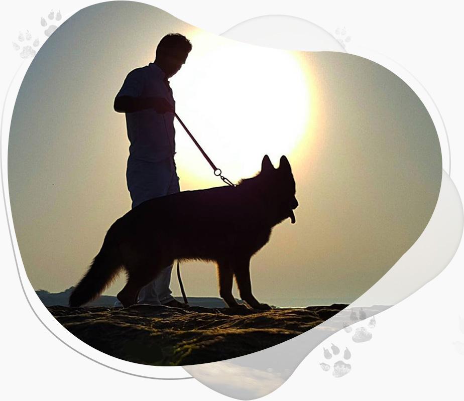 سگ ژرمن شپرد شو لاین