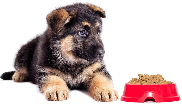 توله سگ ژرمن ارزان قیمت